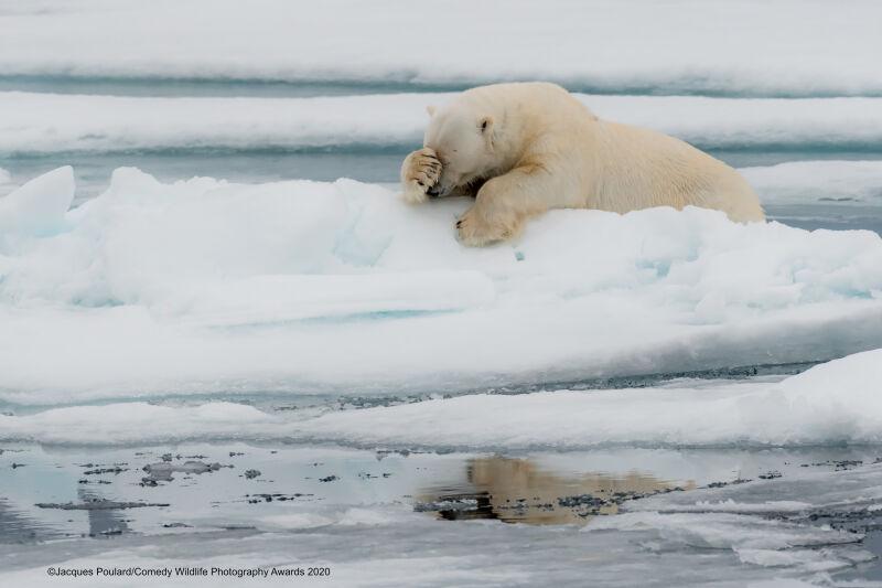 Jacques Poulard/Comedy Wildlife Photo Awards 2020