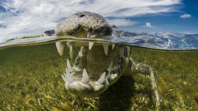 """""""Nasze dzieci już ich nie zobaczą"""". Nagrodzony fotograf podwodny o zwierzętach, którym robi zdjęcia"""