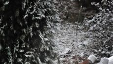 Rezydenci zimowych ogrodów w obiektywie Reportera 24