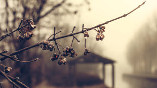Prognoza pogody na pięć dni: poprószy śnieg, popada deszcz. Powieje do 80 km/h
