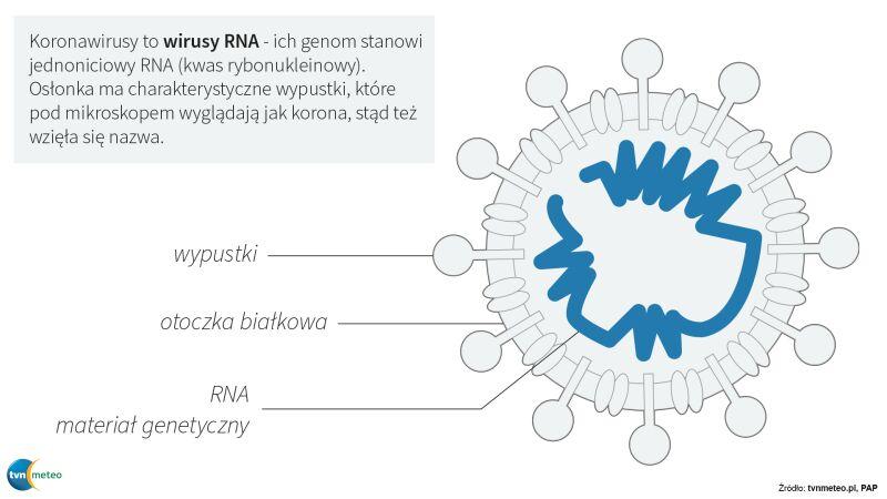Schemat budowy koronawirusa